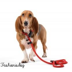 Ensemble collier et laisse Dogs Department rouge